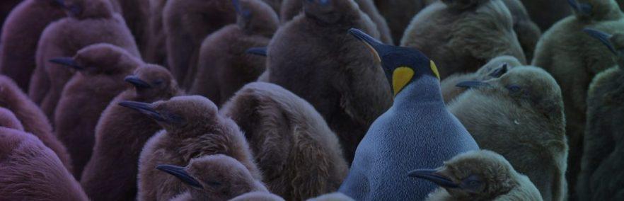 cropped-slidephotopenguin402.jpg